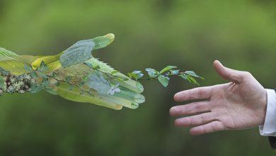 صورة قمة الاقتصاد الأخضر والاعلان عن شعار دورتها السابعة